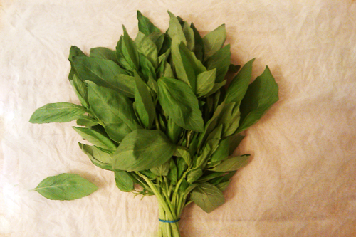 Storing basil in a paper towel - Dresses & Appetizers