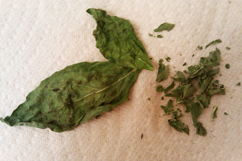 Homemade Dried Basil - Dresses & Appetizers