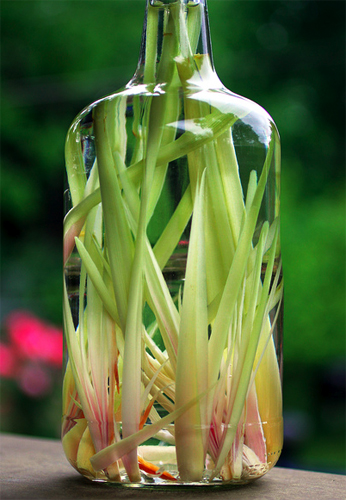 lemongrass vodka picture - Dresses & Appetizers